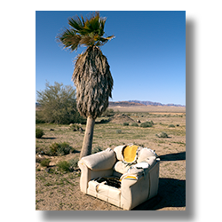 Photo of a white easy chair discarded by a palm tree by Jim Witkowski.